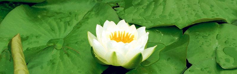 圓光寺 掲示伝道[Words on Buddhism]